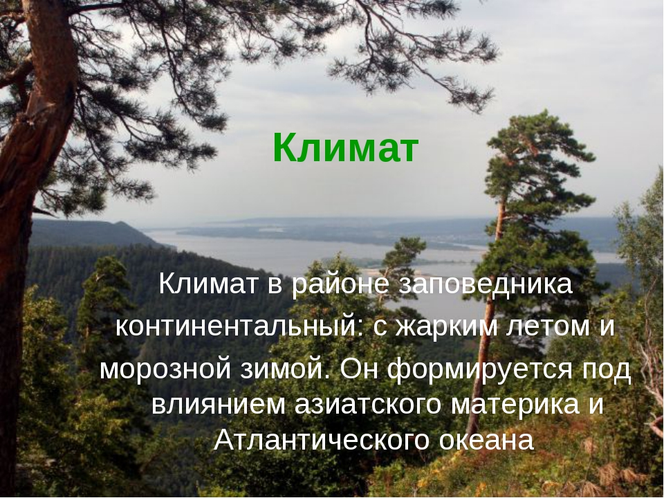 Климат Климат в районе заповедника континентальный: с жарким летом и морозной...