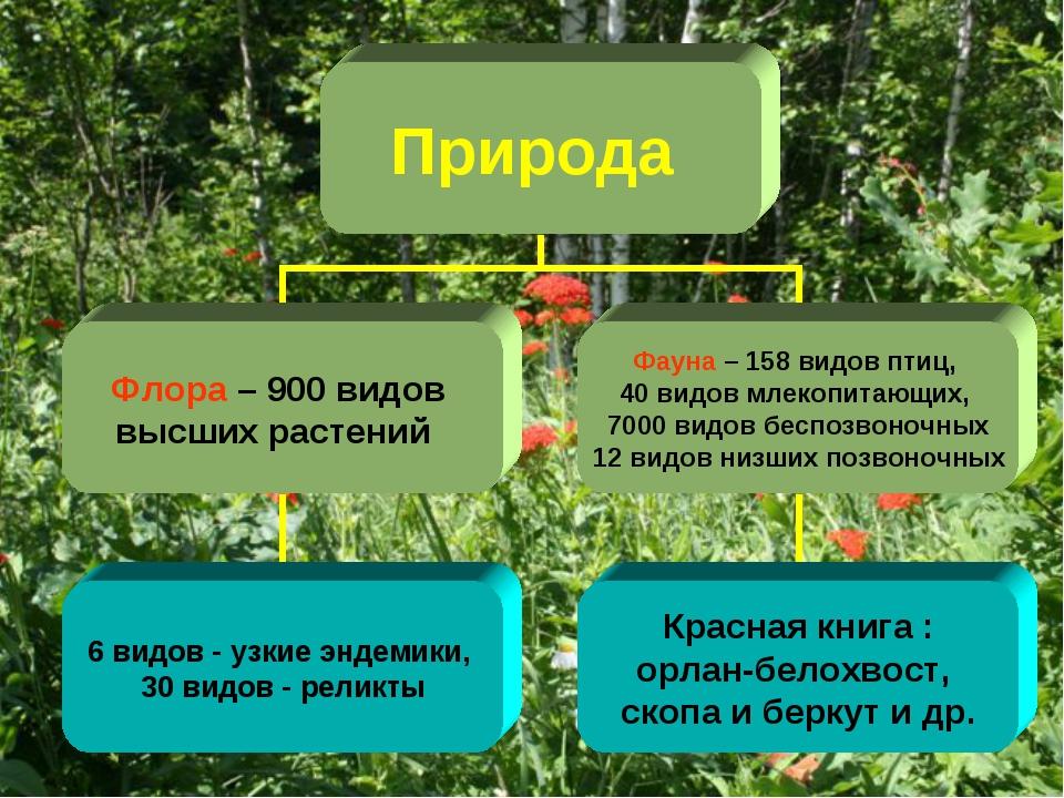 флора россии кратко ресниц