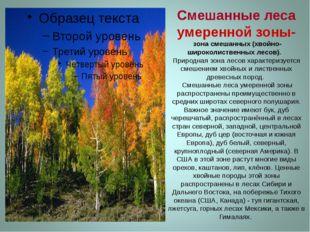 Смешанные леса умеренной зоны- зона смешанных (хвойно-широколиственных лесов)