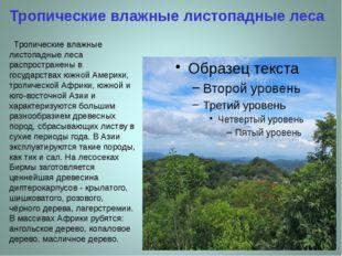 Тропические влажные листопадные леса Тропические влажные листопадные леса рас