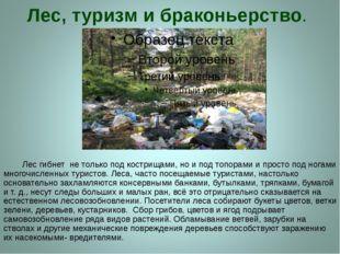 Лес, туризм и браконьерство. Лес гибнет не только под кострищами, но и под то