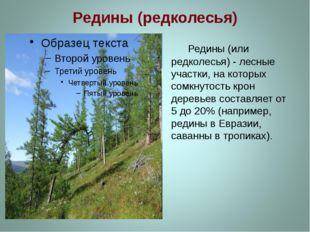 Редины (редколесья) Редины (или редколесья) - лесные участки, на которых сомк