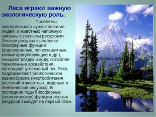 Леса играют важную экологическую роль. Проблемы экологического существования