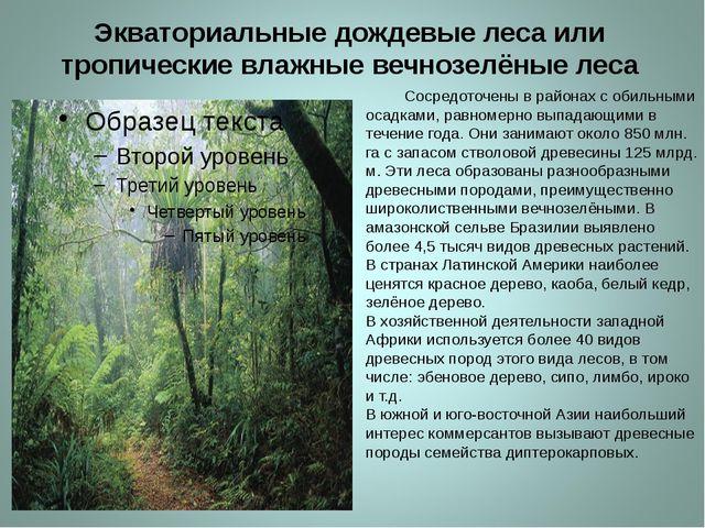 Экваториальные дождевые леса или тропические влажные вечнозелёные леса Сосред...