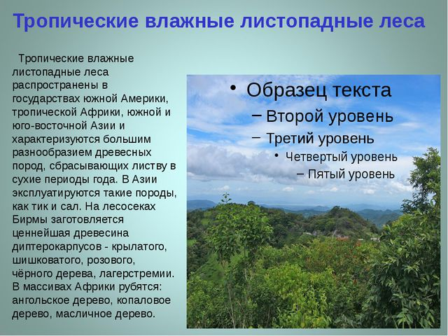 Тропические влажные листопадные леса Тропические влажные листопадные леса рас...