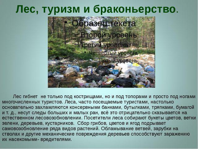 Лес, туризм и браконьерство. Лес гибнет не только под кострищами, но и под то...