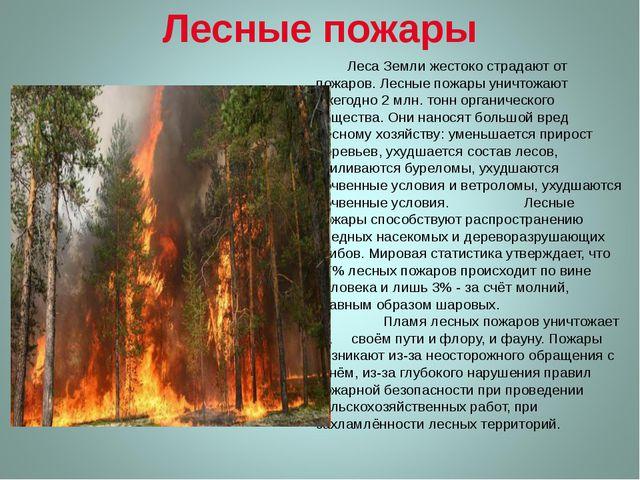 Лесные пожары Леса Земли жестоко страдают от пожаров. Лесные пожары уничтожаю...