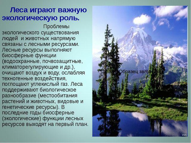 Леса играют важную экологическую роль. Проблемы экологического существования...