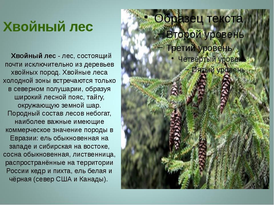 Хвойный лес Хвойный лес - лес, состоящий почти исключительно из деревьев хво...