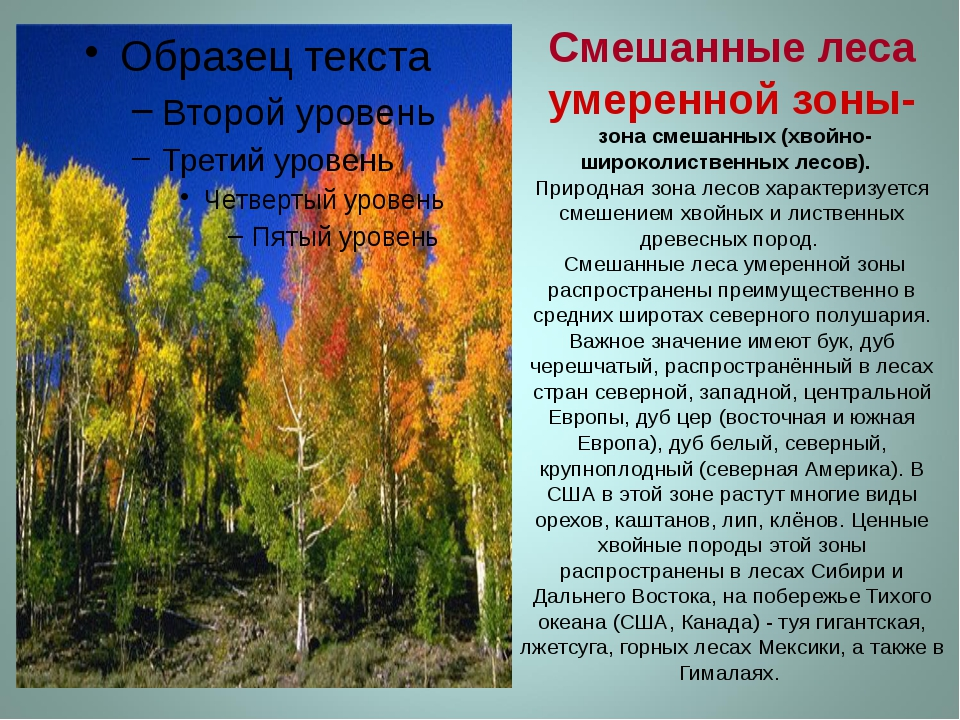 Смешанные леса умеренной зоны- зона смешанных (хвойно-широколиственных лесов)...