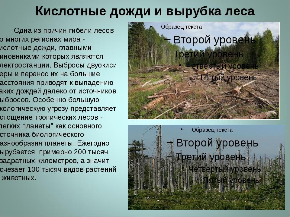 Кислотные дожди и вырубка леса Одна из причин гибели лесов во многих региона...