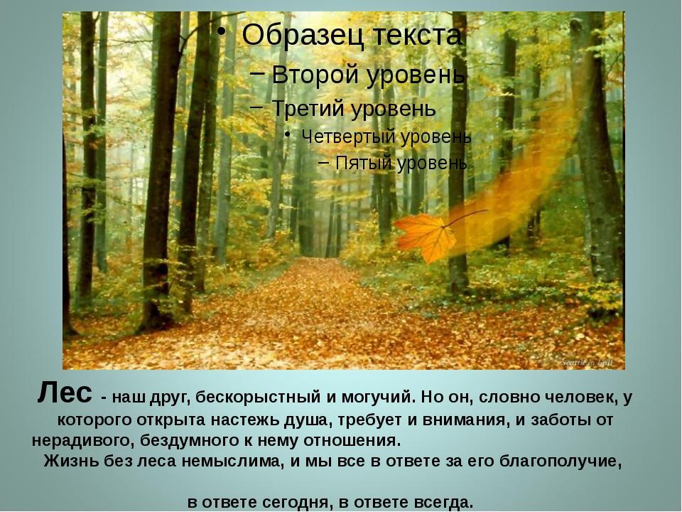 Лес - наш друг, бескорыстный и могучий. Но он, словно человек, у которого отк...