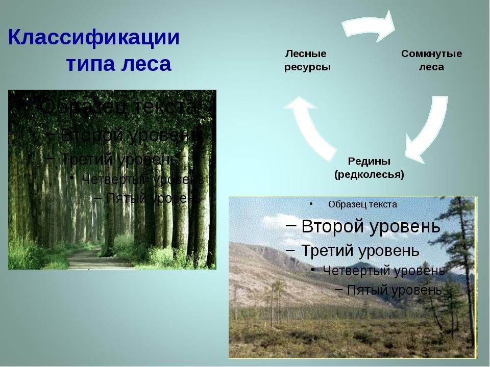 Классификации типа леса