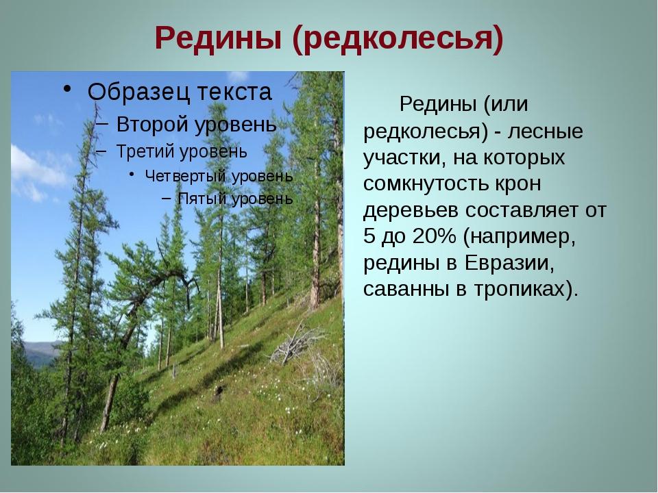 Редины (редколесья) Редины (или редколесья) - лесные участки, на которых сомк...