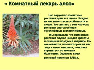 « Комнатный лекарь алоэ» Нас окружают комнатные растения дома и в школе. Каж