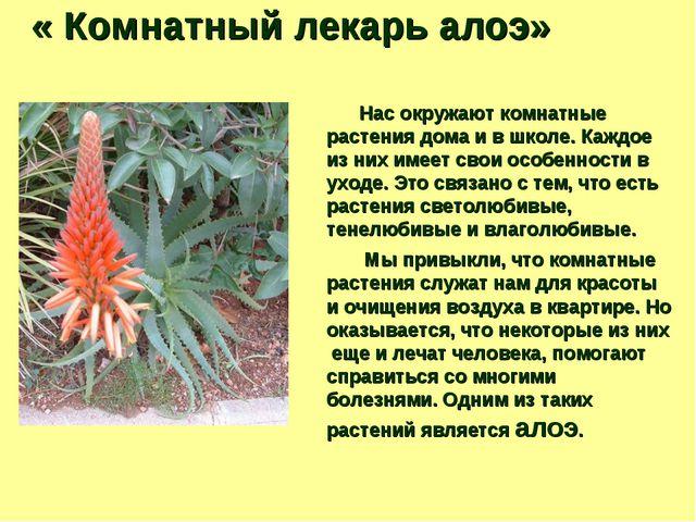« Комнатный лекарь алоэ» Нас окружают комнатные растения дома и в школе. Каж...