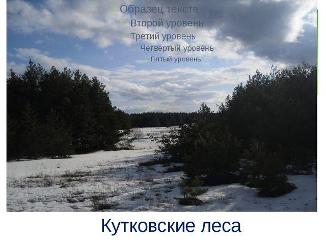Кутковские леса