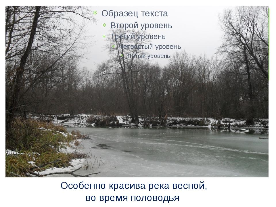 Особенно красива река весной, во время половодья