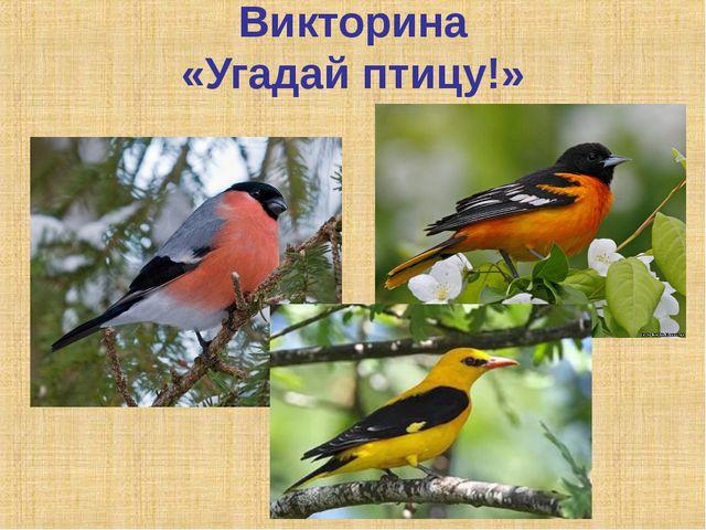 Викторина «Угадай птицу!»