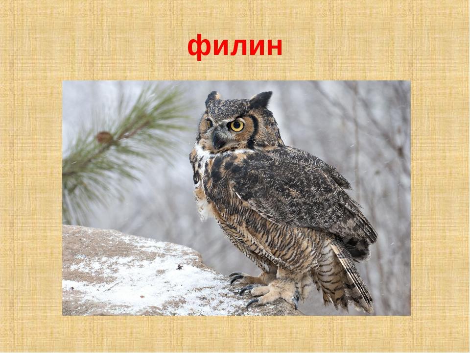 филин