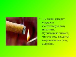 1-2 пачки сигарет содержат смертельную дозу никотина. Курильщика спасает, что