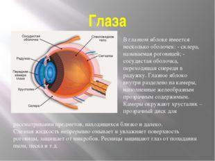 Глаза В глазном яблоке имеется несколько оболочек: - склера, называемая рогов