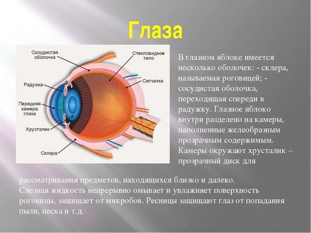 Глаза В глазном яблоке имеется несколько оболочек: - склера, называемая рогов...