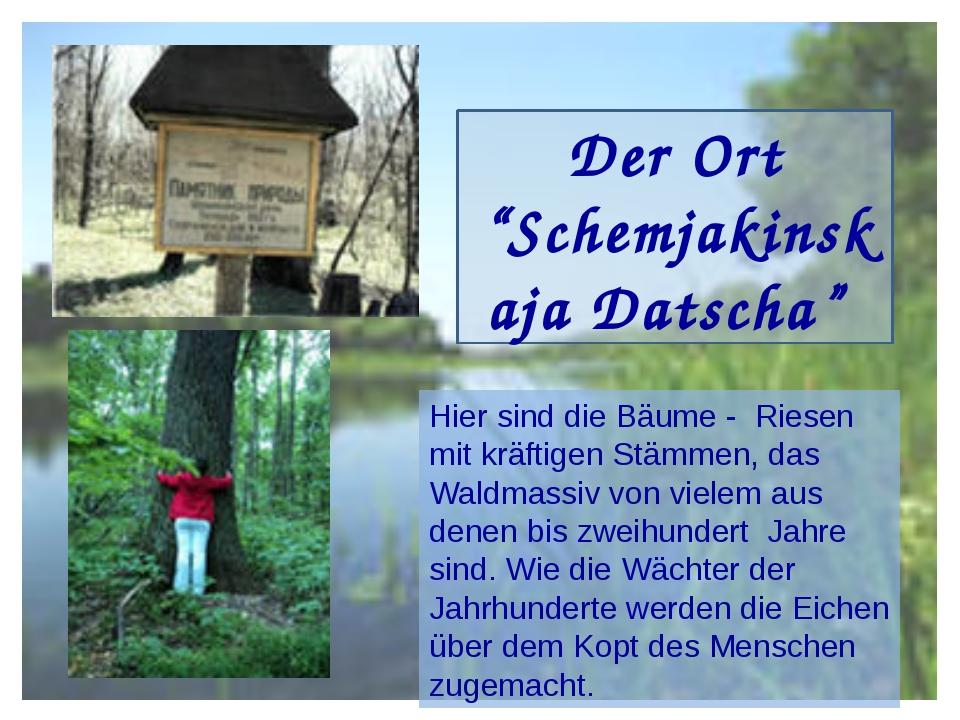 """Der Ort """"Schemjakinskaja Datscha"""" Hier sind die Bäume - Riesen mit kräftigen..."""
