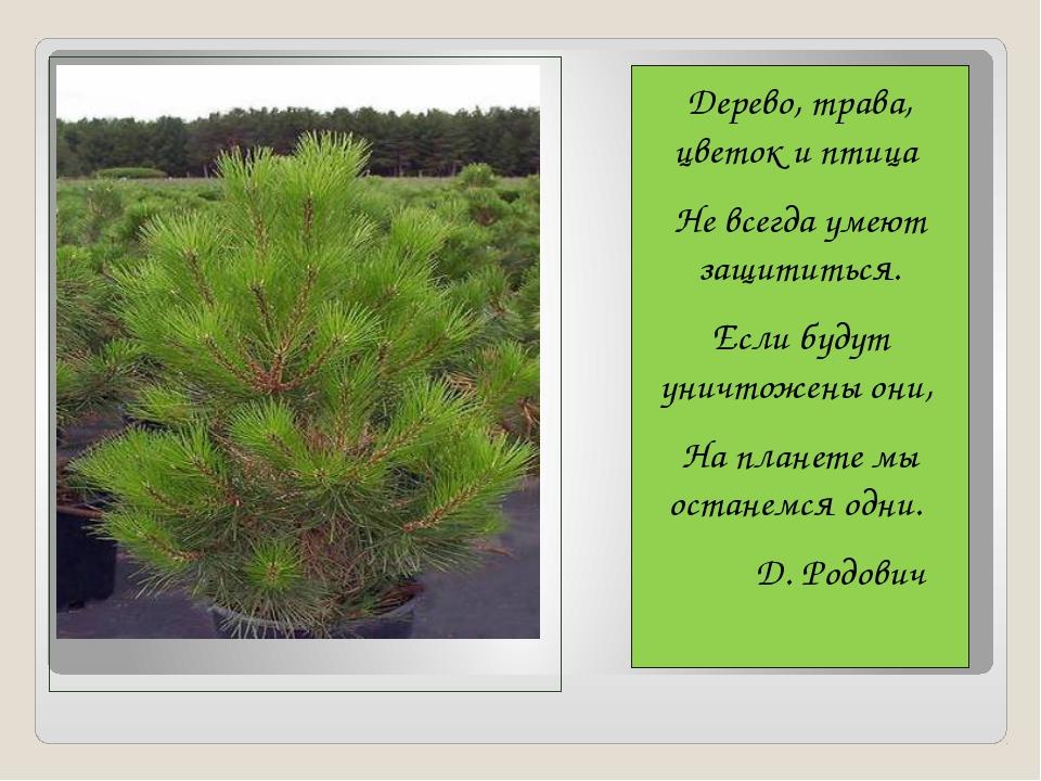 Дерево, трава, цветок и птица Не всегда умеют защититься. Если будут уничтож...