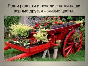 В дни радости и печали с нами наши верные друзья – живые цветы.