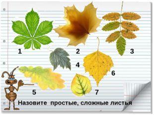 Назовите простые, сложные листья 1 2 3 4 5 6 7