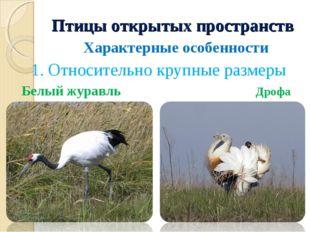 Птицы открытых пространств Характерные особенности 1. Относительно крупные ра