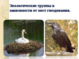 Экологические группы в зависимости от мест гнездования.