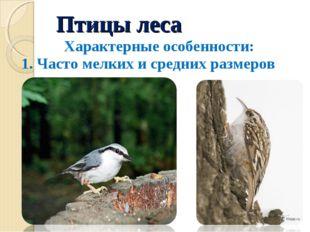 Птицы леса Характерные особенности: 1. Часто мелких и средних размеров Пополз