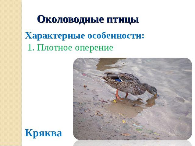 Околоводные птицы Характерные особенности: 1. Плотное оперение Кряква