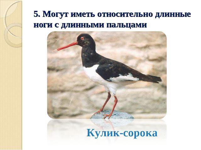 5. Могут иметь относительно длинные ноги с длинными пальцами Кулик-сорока