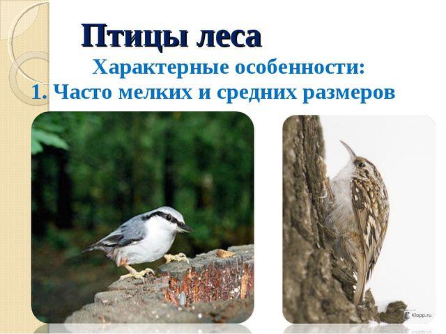 Птицы леса Характерные особенности: 1. Часто мелких и средних размеров Пополз...
