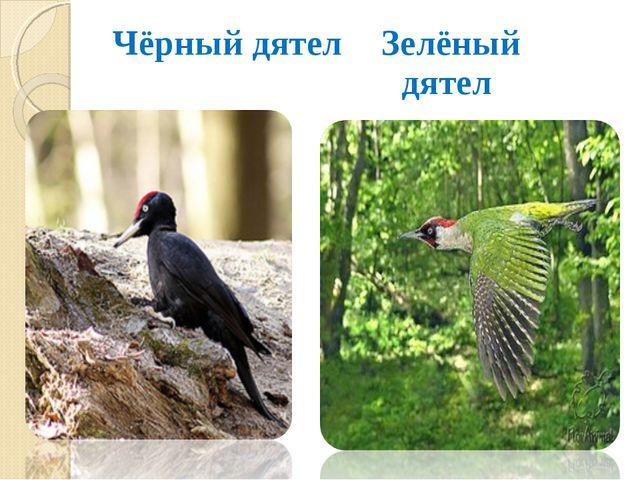 Чёрный дятел Зелёный дятел