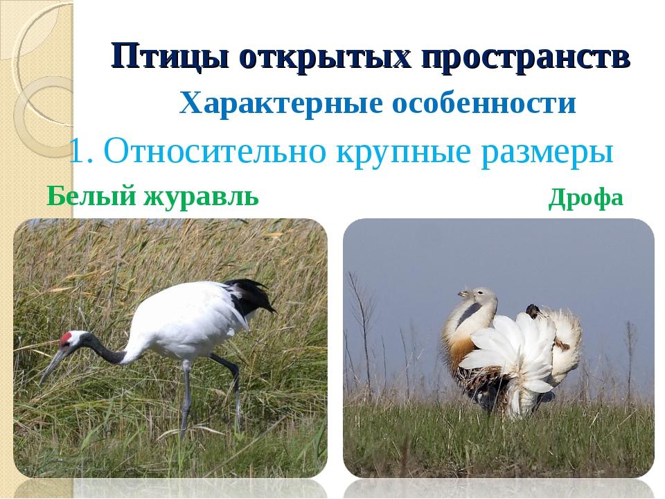 Птицы открытых пространств Характерные особенности 1. Относительно крупные ра...