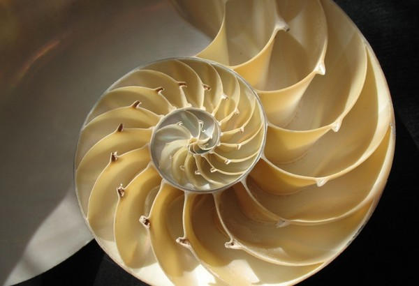 http://nezna.li/images/article/mathematics/18216/02-nautilus.jpg