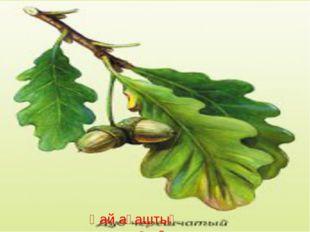 Қай ағаштың жапырағы?