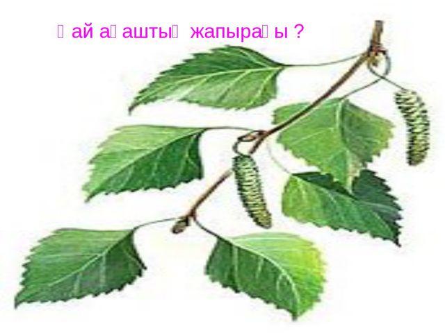 Қай ағаштың жапырағы ?