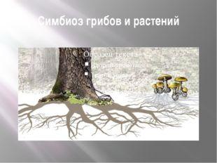 Симбиоз грибов и растений