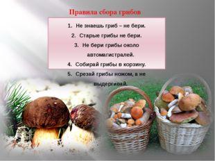 Правила сбора грибов Не знаешь гриб – не бери. Старые грибы не бери. Не бери