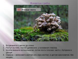 Ядовитые грибы Ложные опята !!! Встречаются с весны до осени. Растут на пнях