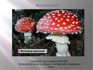 Ядовитые грибы !!! Красивый, ярко окрашенный гриб. Встречается летом и осень