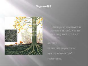 Задание №2 В микоризе участвуют и растение и гриб. Кто из них получает от это