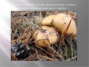 В лесу, на радость людям, средь молодых сосенок, В блестящей темной шляпке р