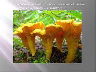 Ходят в рыженьких беретах, осень в лес приносят летом. Очень дружные сестрич