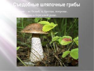 Съедобные шляпочные грибы Не спорю – не белый, я, братцы, попроще. Расту я об